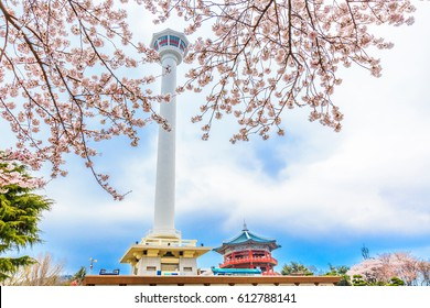 Busan Tower with cherry blossom, Busan, South Korea
