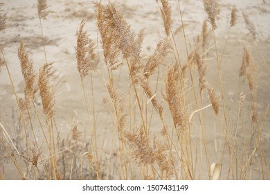 busan wind a reed bed