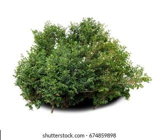 Bush of a box.