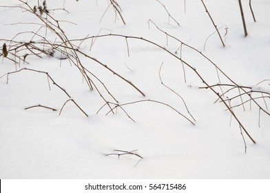 Bush branches and snow in winter forest, close up