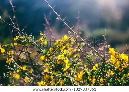 Bush bright yellow flowers beautiful spring stock photo edit now bush with bright yellow flowers beautiful spring background mightylinksfo