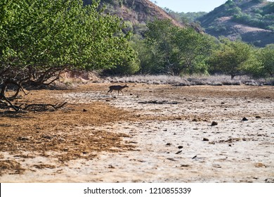 The bush and deer