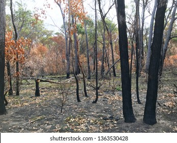 Bush fire devastation and regrowth in a forest in the Girraween National Park in Queensland, Australia