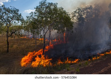 Bush Fire - Forest Fire