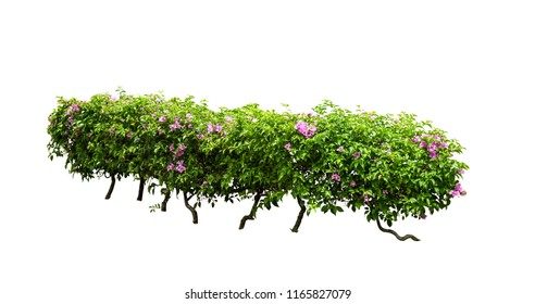 bush flower tree and fence isolated on white