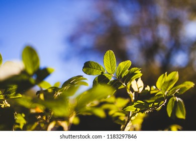 Bush foliage bokeh nature background