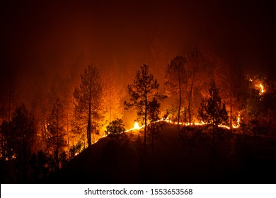 Bush forest wild fire at night in Barechhina, Almora, Uttarakhand, India