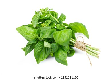 A bush of fresh basil stapled with a rope isolated on a white background