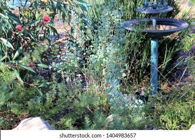 Bush garden, South Australia, with Hakea, Saltbush, Grevillea, Grass Tree and birdbath