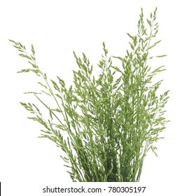 Bush of green grass isolated on a white background.