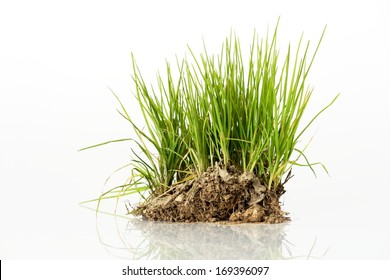 Bush of green grass from meadow