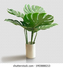 Bush Green Monstera leaf isolated transparency white background.Tropical leaves object clipping path - Shutterstock ID 1903888213