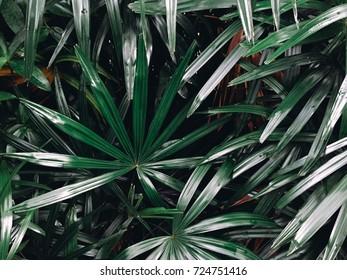 Bush of green tree in the garden in sunlight used for wallpaper