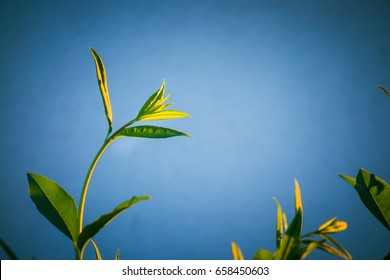 Bush leaves