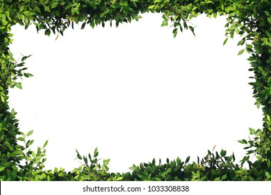 Bush leaves leaf frame, white background
