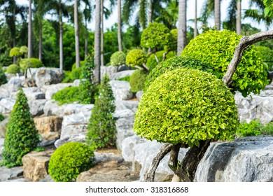 Bush on the rocks in the garden
