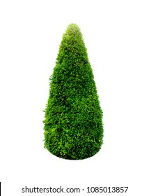 Bush or shrub isolated with clipping paths for garden design.