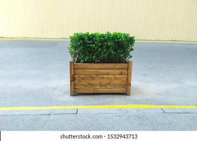 Bush or shrub trimming in wood planter on street decorative.
