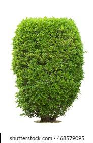 Bush or shrubs on white background , isolated