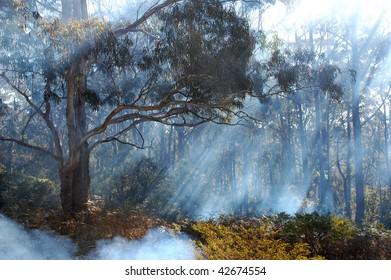 Bush smoke from fire, Blue Mountains, Australia