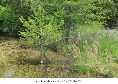 Bush in a swamp in Boerne Texas