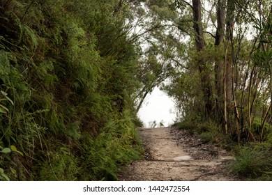 Bush walking track in Blue Mountains, Australia.