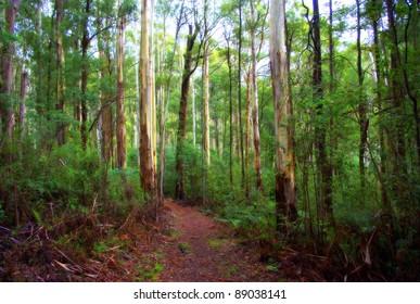 Bush walking track in country victoria australia amongst the beautiful australian native gum trees