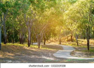 A bush walking track through a beach side forest with rays of golden sunshine filtering through the trees