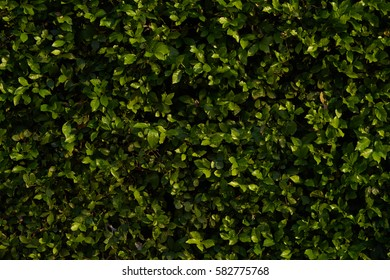 Bush Wall for background