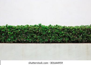 bush wall on white wall