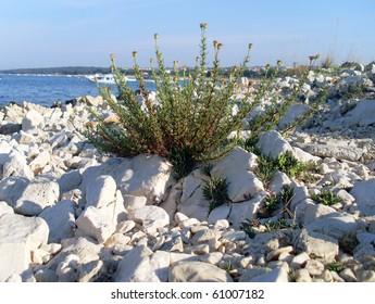 bush and white stones