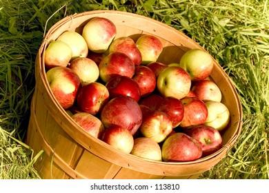 A bushel of apples.