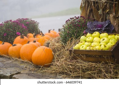 Bushel of apples in a basket next to pumpkins in an autumn setting