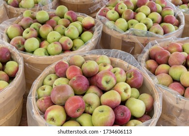 Bushel baskets of  freshly picked apples