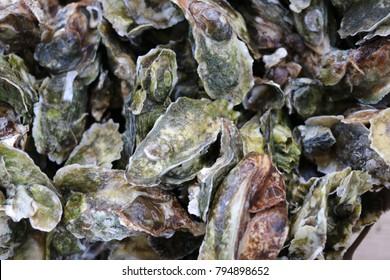 Bushel of Oysters