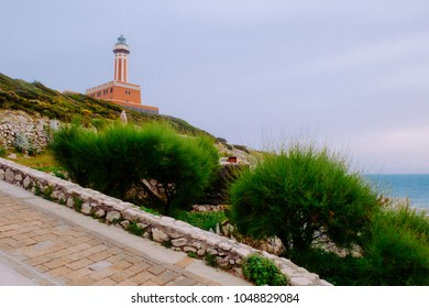 Bushes around The Punta Carena lighthouse at stormy weather, Capri, Italy.