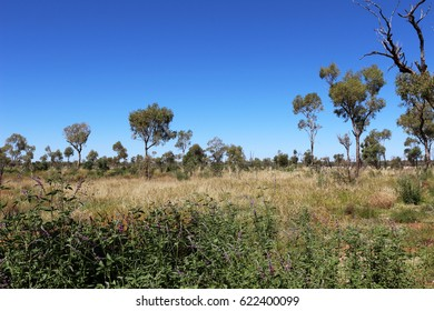 bushes in australian outback