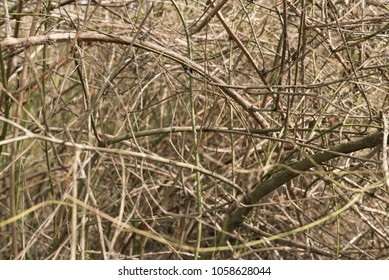 bushes in the dense forest