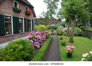 bushes of flowering hortensia in front or back yard farm or living house