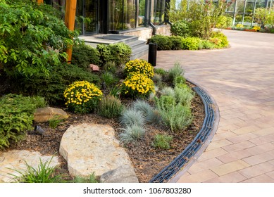 bushes and flowers in landscape design of paths in the yard