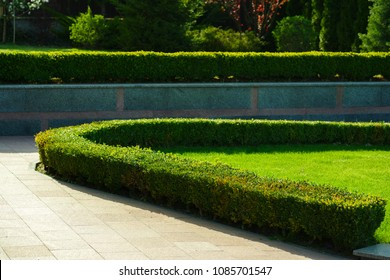 bushes in the landscape design of the house