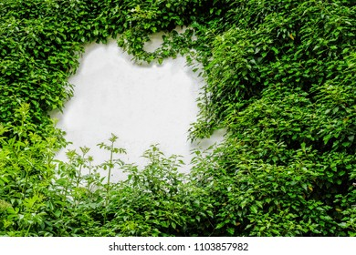 bushes on white wall with some free space