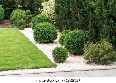 bushes and plants in landscape design