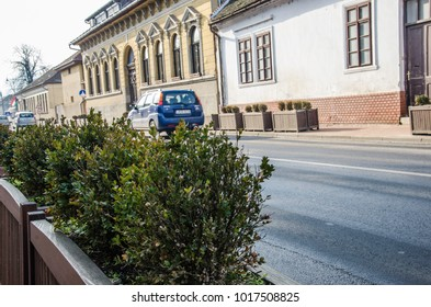 Bushes in pots on the road with city buildings and car blurred