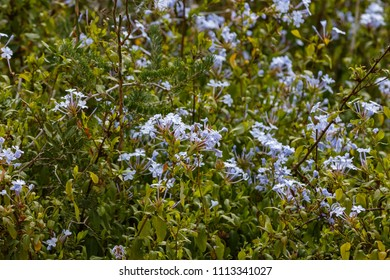 Bushes surrounded with blue Flowers in the field