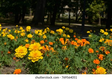 Bushes of yellow and orange summer flowers in a large public park