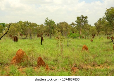 Bushland in Australia with termite mounds