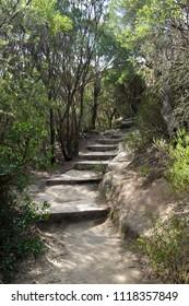 Bushwalking in Blue Mountains. Summer in Australia.