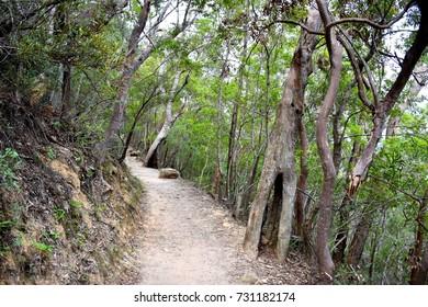 Bushwalking track, Blue Mountains, Sydney, NSW, Australia
