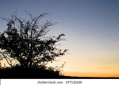 A bushy tree standing alone at sunset time.